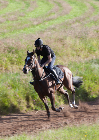 horse-in-traning
